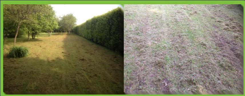 Pourquoi et comment scarifier sa pelouse blog quip jardin for Tarif de tonte de pelouse