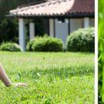 Entretien gazon : comment rendre son gazon beau et résistant