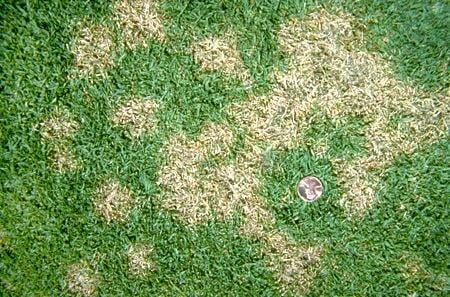 Mauvaises herbes jardin mousse champignons comment for Eliminer les vers