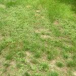 Mauvaises herbes jardin, mousse, champignons… comment éviter tout cela ?