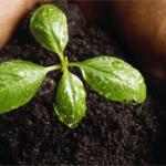 Les engrais naturels pour le jardin