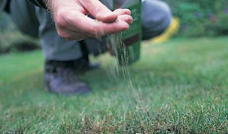 guide pelouse un tapis vert toute l 39 ann e gr ce quip 39 jardin. Black Bedroom Furniture Sets. Home Design Ideas