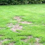 Renover sa pelouse : quand et comment réensemencer ?