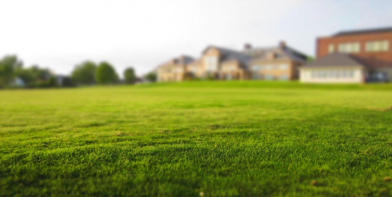 Guide pelouse   Un tapis vert toute l'année grâce à équip'jardin