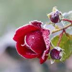 Comment réparer les dégâts causés à votre jardin en hiver