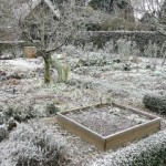 Que faire au jardin en février