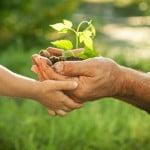 Jardin écologique : quelles sont les bonnes pratiques
