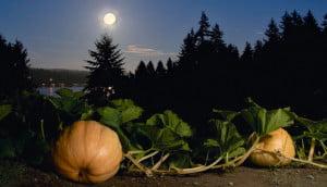 Jardiner-avec-la-lune