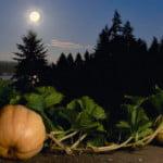 Jardiner avec la lune : Calendrier 2015