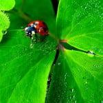 Produits phytosanitaires et autres pesticides, chronique d'une fin annoncée !