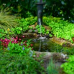 Installer un bassin naturel dans son jardin