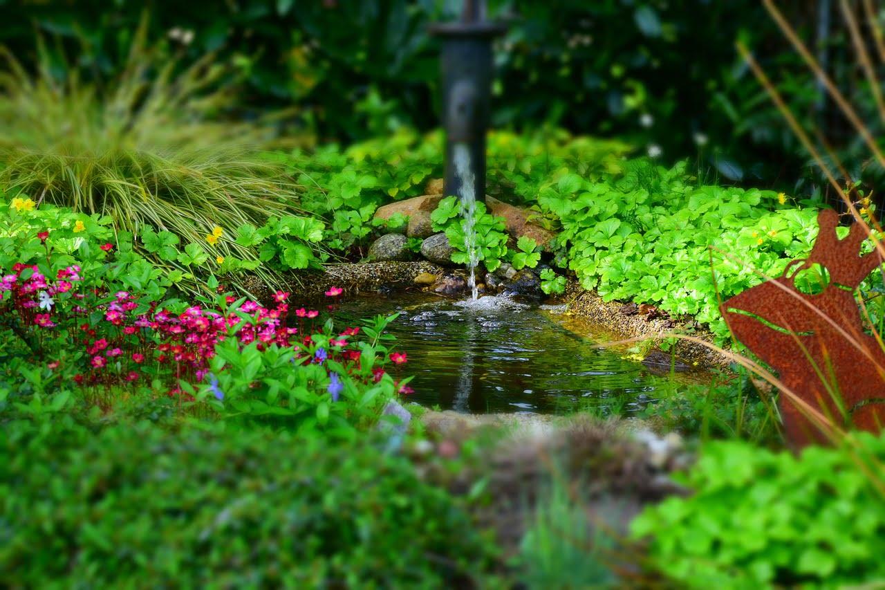 garden-768142_1280