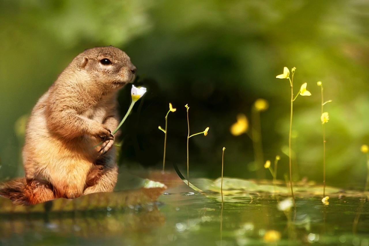 squirrel-610864_1280