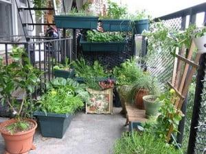 des-fruits-et-legumes-au-balcon_2192622-L