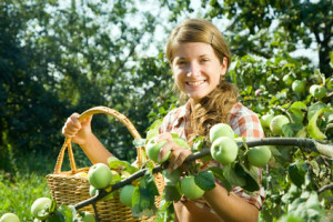 young farm girl picking apple