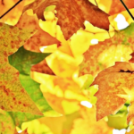 Profiter de son jardin en automne