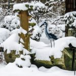 Un hiver au jardin