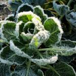 Méthode de protection pour passer l'hiver