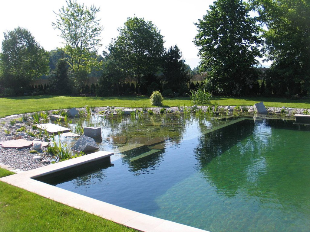 Construire sa piscine naturelle blog equip 39 jardin for Piscine or