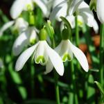 Les signes qui annoncent le printemps