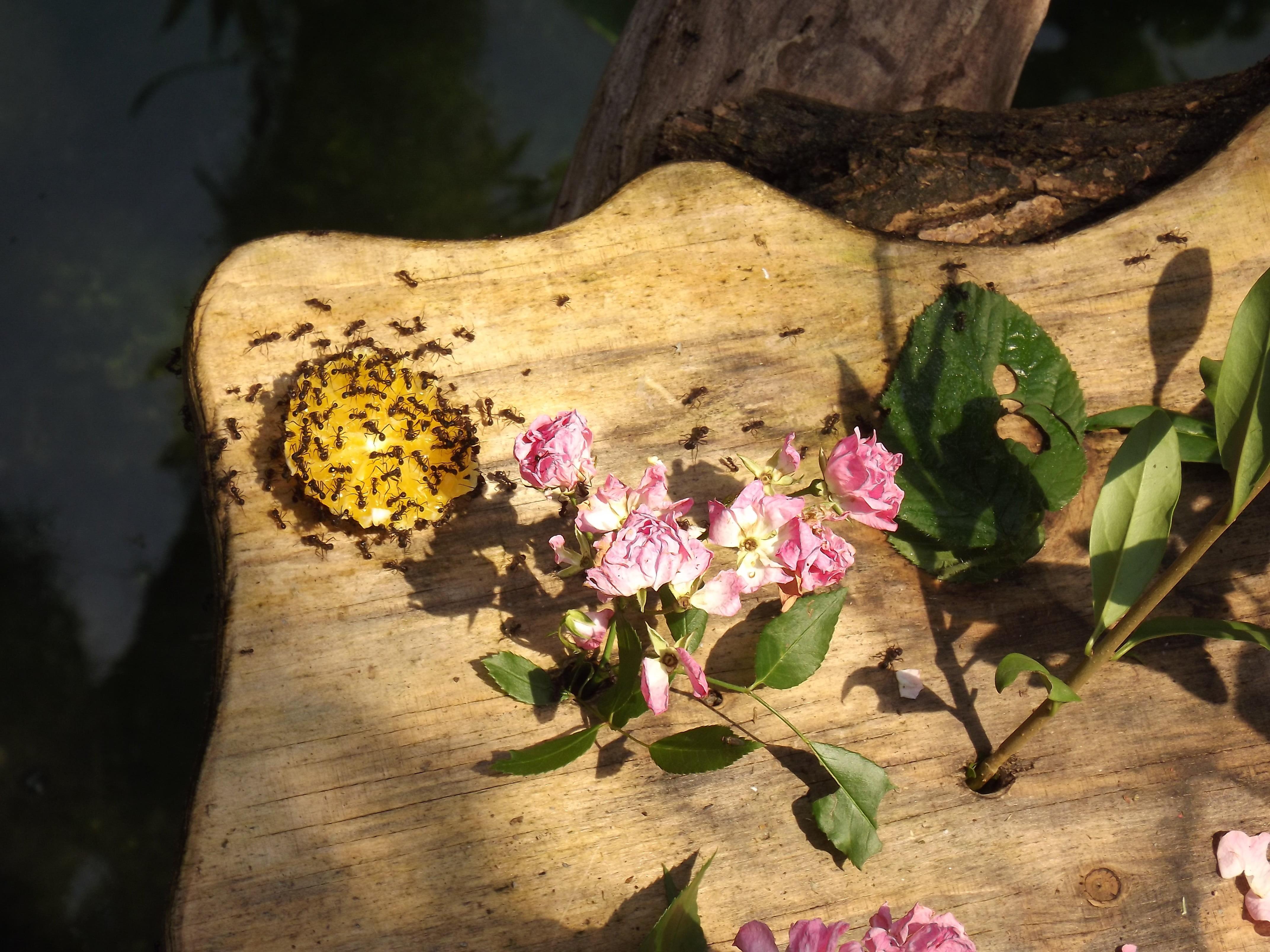 Faire Fuir Les Fourmis fourmis au jardin : que faire ? quels remedes naturels ?