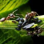 Fourmis au jardin : Le guide pour lutter contre les fourmis au naturel
