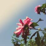 Comment soigner son jardin en été ?
