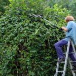 landscape-gardener-409147