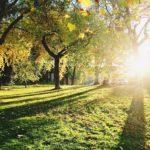 Novembre au jardin : quelles sont les activités ?
