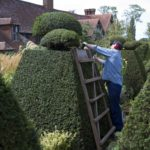topiary-898927