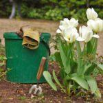 L'arrêt des pesticides au jardin : quelles méthodes alternatives ?