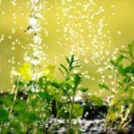 Dossier jardin, potager : économiser l'eau au jardin