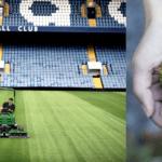 Entretien terrains de sport : que veulent nous dire les mauvaises herbes ?