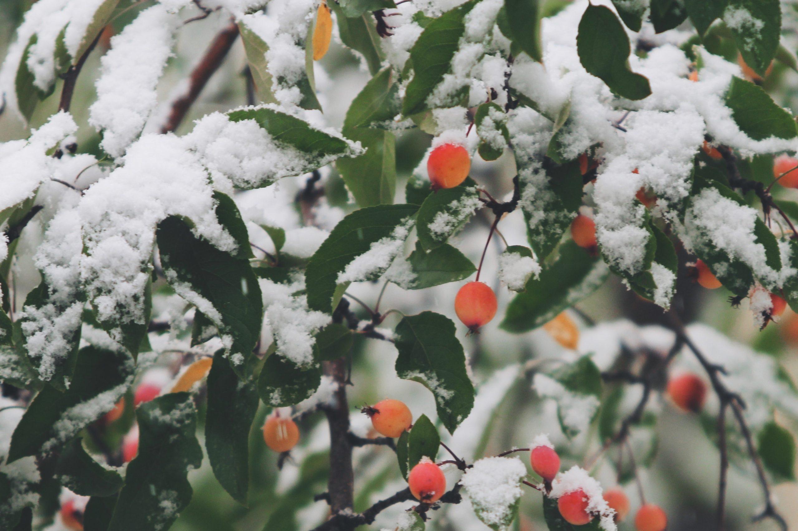 jardin_hiver_coloré