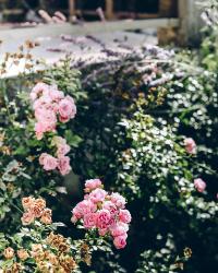 jardin_à_l_anglaise
